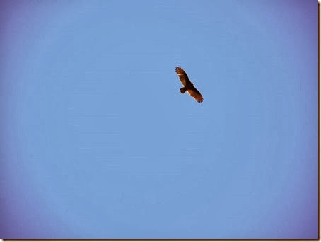 20130928_123032-vultures