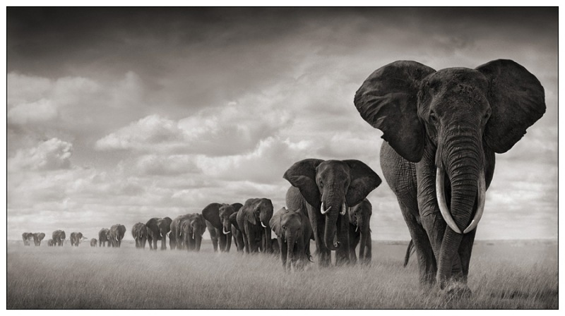 ElephantsMGD