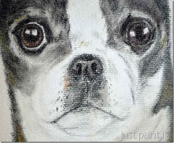boston-terrier-sketch-L