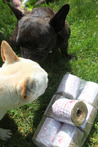 I think we Frenchies should help them with this chore.  You know how much we love peonies and we would appreciate them so much more knowing that we had a paw in helping them flourish!