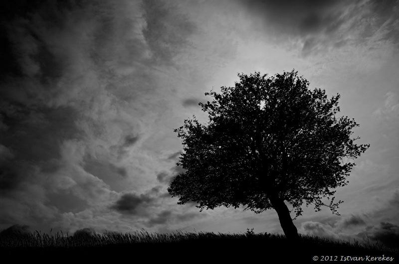 Istvan Kerekes dark Tree