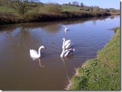 Wiltshire-20130430-00514