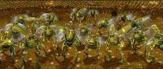 09 les sauterelles