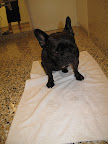 It's time to dry my paws off - this towel is so soft. Do you see that the floor matches the tub? That is so neat.