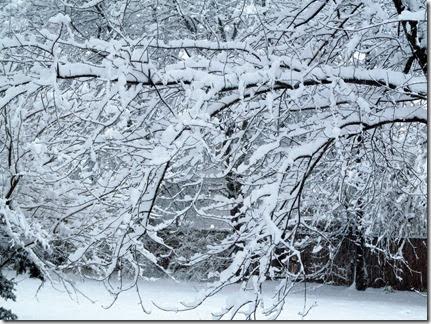 snow12-14-13g