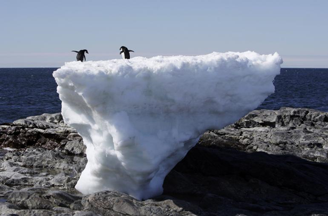 Two Adelie penguins stand atop a block of melting ice on a rocky shoreline at Cape Denison, Commonwealth Bay, in East Antarctica, 1 January 2010. Photo: Pauline Askin / Reuters