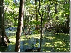 Pretty swamp