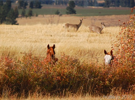 deer and horses 0015