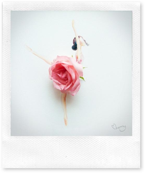 hoje me vesti de rosas só para te ver