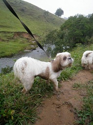 Dogs Trekking 4 (268)