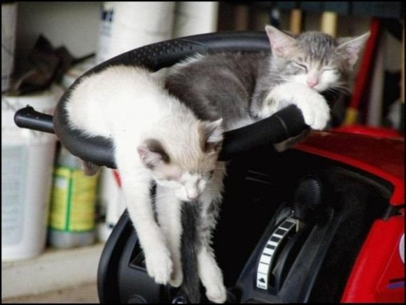 Cats Will Sleep Anywhere 13
