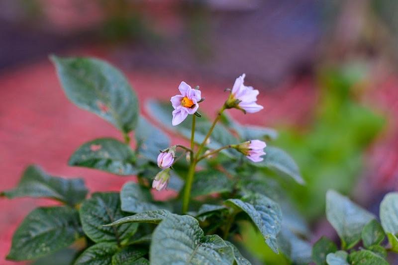 garden-11308