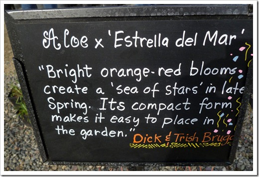 120310_UCDArboretum_Aloe-Estrella-del-Mar_01