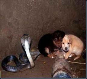 cobra-protege-filhote-cachorros