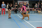 20130510-Bullmastiff-Worldcup-0161.jpg