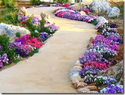 arboles con flores (12)