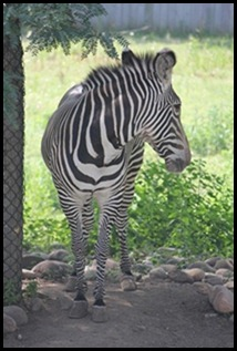 Zoo5 068