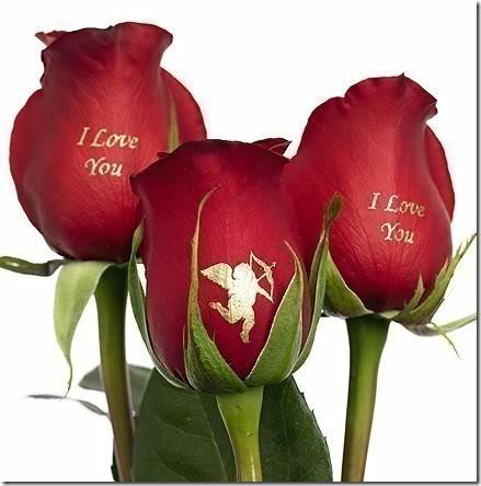 flor día del amor (23)