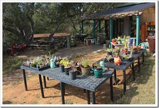 Succulents and More: UC Santa Cruz Arboretum late winter update
