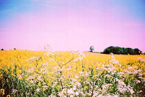 Summer-Fields-10---XPRO