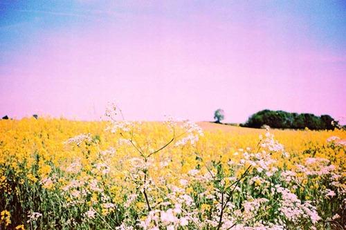Summer-Fields-10---XPRO