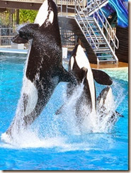 Sea World Shamu 2