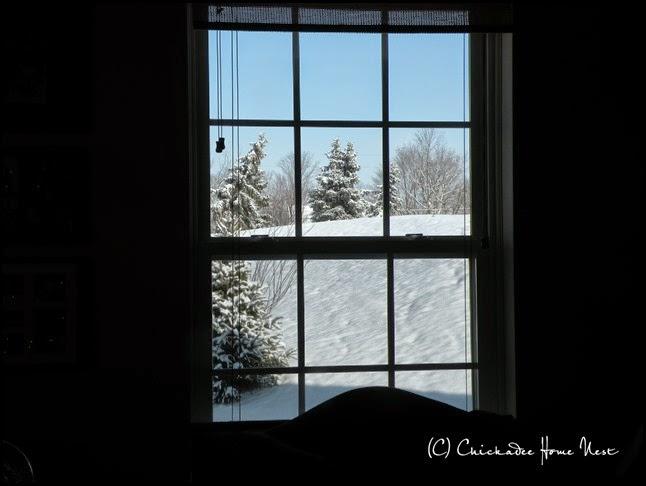 Snow, Winter Wonderland (26)