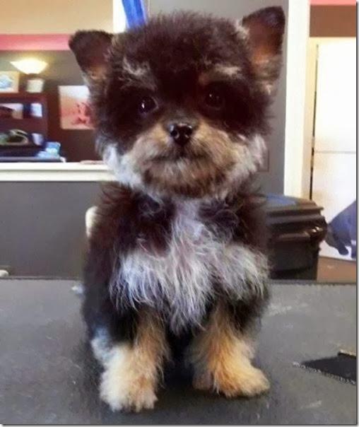 strange-dog-cross-breeds-009