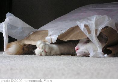 'cat in a bag' photo (c) 2009, normanack - license: http://creativecommons.org/licenses/by/2.0/