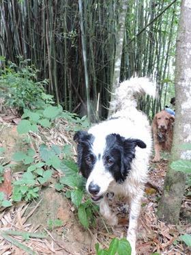 Cães em foco 1 (161)