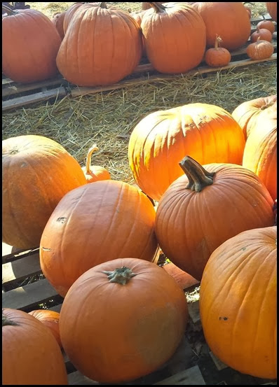 pumpkin patch4