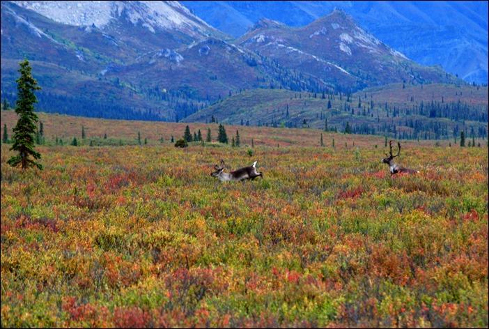 2013_08_Alaska 994