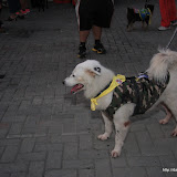 Pet Express Doggie Run 2012 Philippines. Jpg (13).JPG