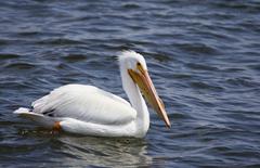 White Pelican Palacios TX