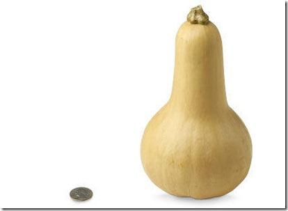 29-butternut-squash[1]