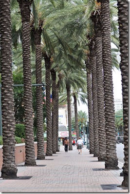 palm-trees-NOLA