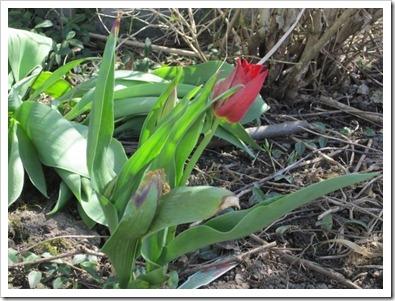 20120418_spring-garden_008