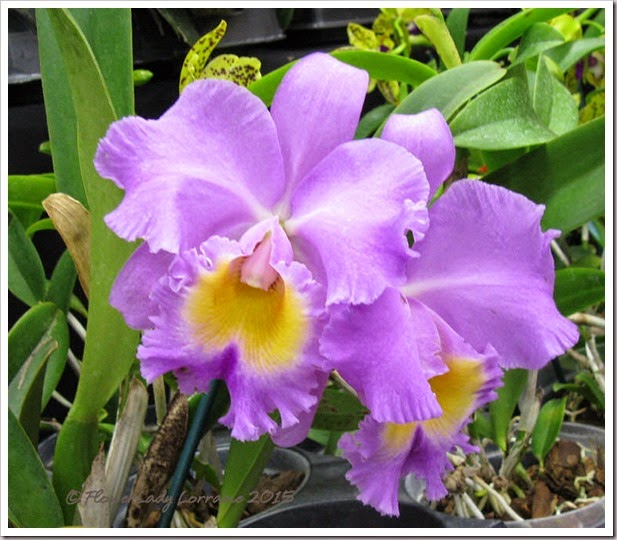 02-08-orchids4jpg