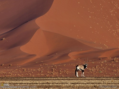 wallpapers national geographic desbaratinando (12)