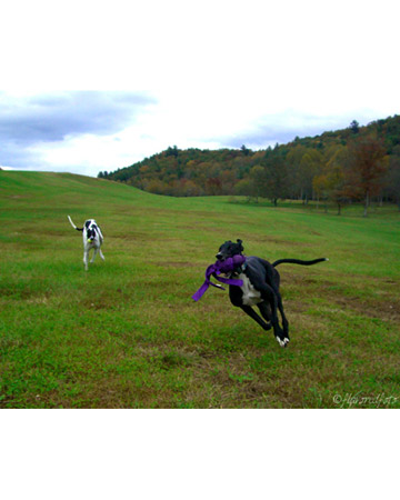 Faith and Lucky, dogs from Clayton, Georgia.
