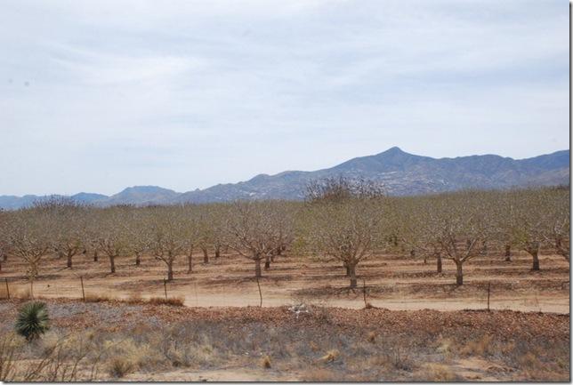 04-04-13 A Travel Casa Grande to NM Border I10 024