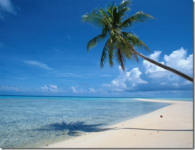 palm_tree_beach