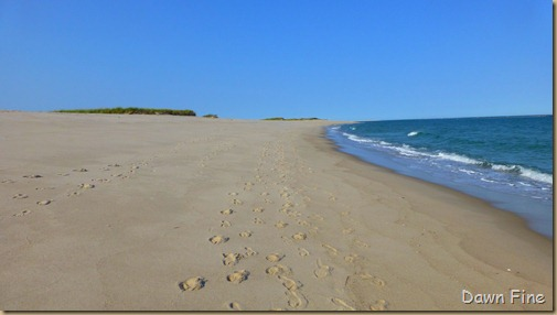 cape cod_006