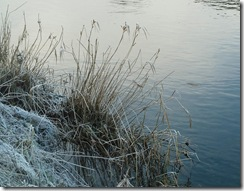 frosty grasses2