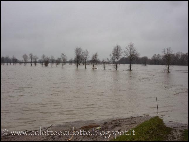 Piena del Reno a Padulle - 31 gennaio 2014 (29)