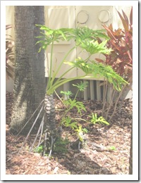 Florida vacation 3.12 plant with strange roots