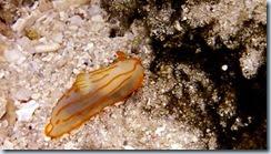Snorkeling at Purumamasa Island_07 07 14_0010
