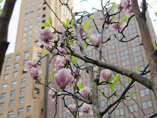 I love the smell of magnolias.