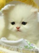 puppy-cat_poze mobil