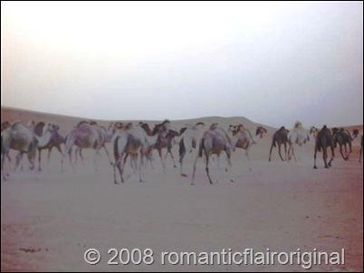 CAMELS_ON_SAND